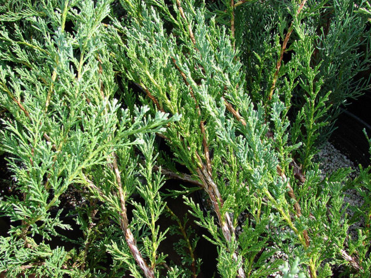 A close-up look at the foliage.