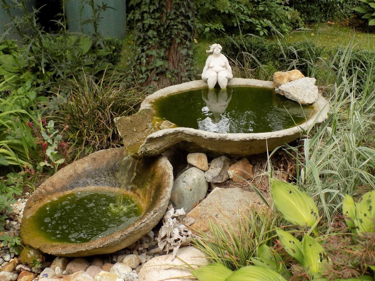 Clean birdbaths are healthier for birds and humans.