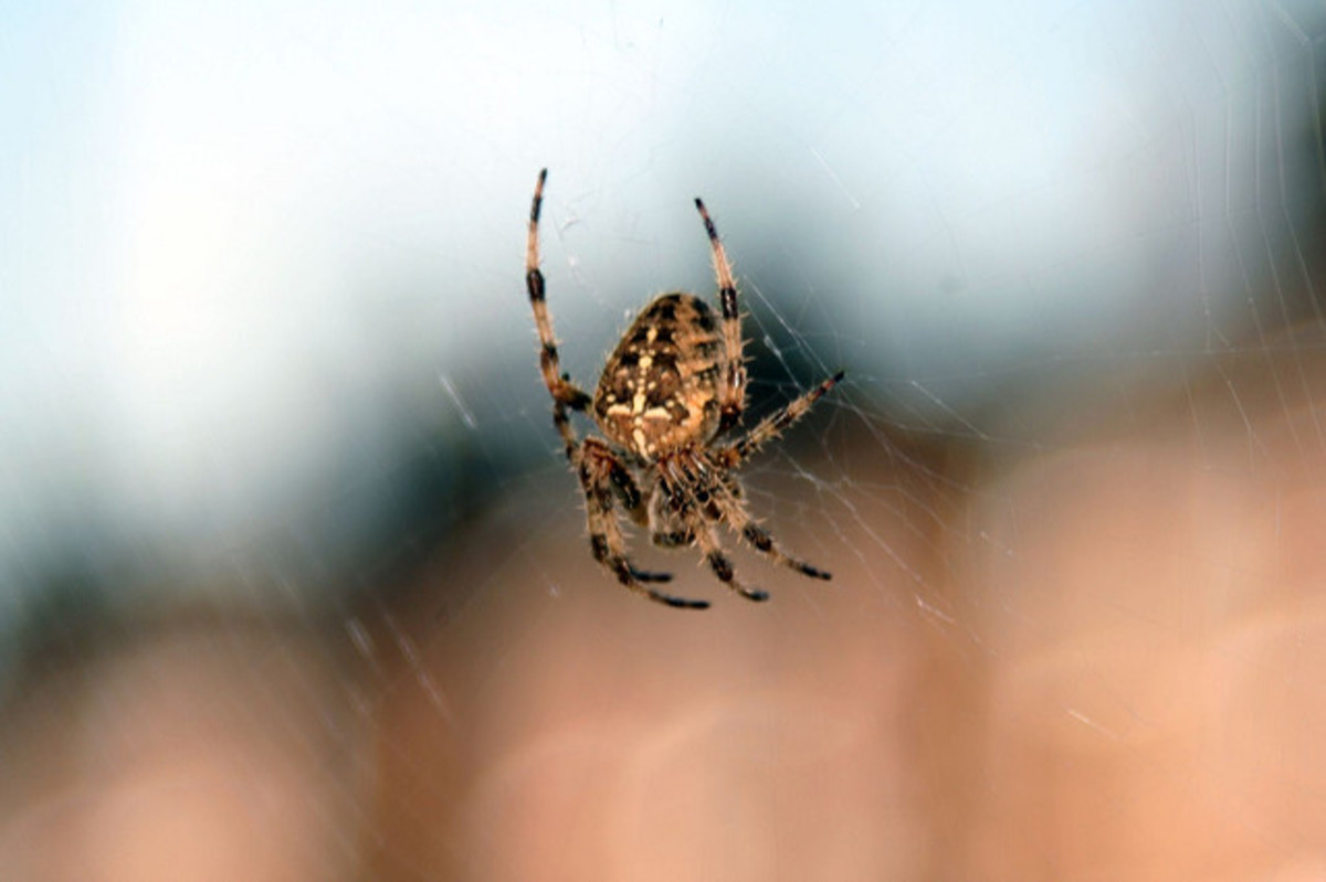 Many spiders are good at keeping pests away from plants and people.