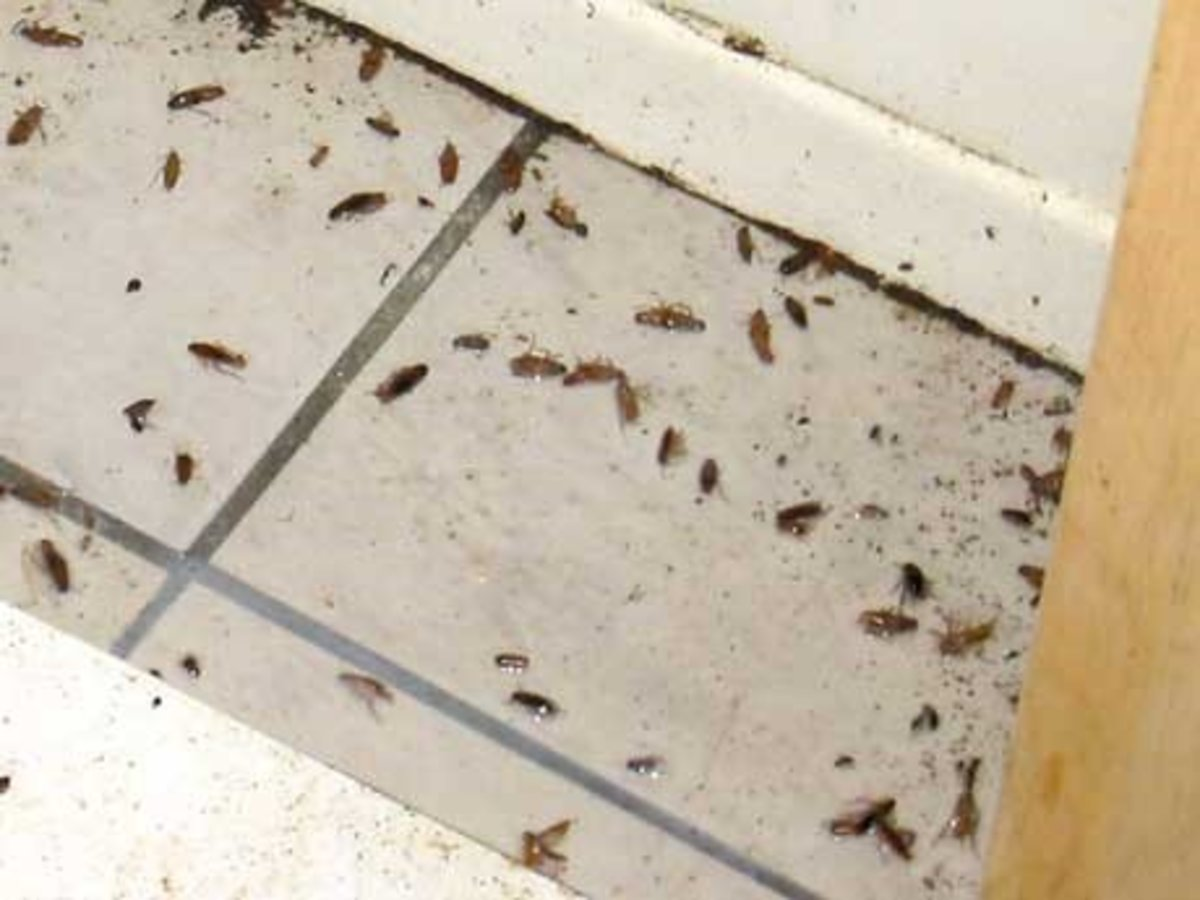 how to get rid of roaches diy extermination dengarden