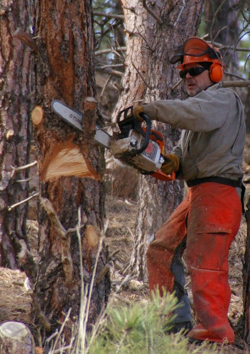Man in safety gear using chainsaw--note that his visor is protecting his helmet, not his face, however!