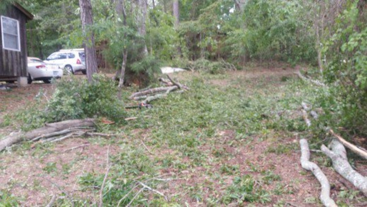 How (Not) to Clean Up Woody Hurricane Debris