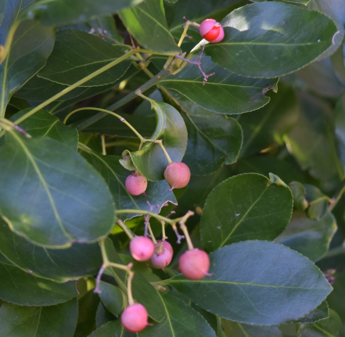 9 Reasons to Use Evergreen Shrubs in Your Garden