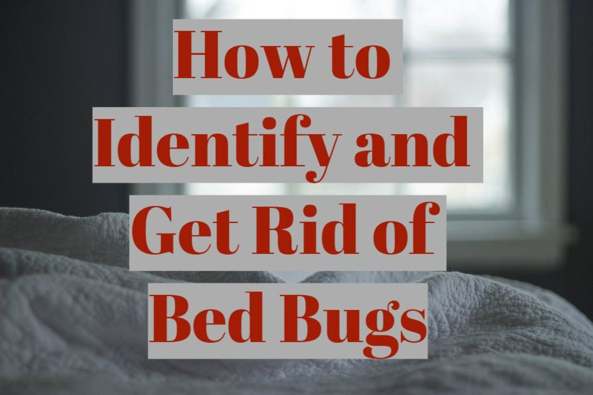 How to Identify and Get Rid of Bed Bugs