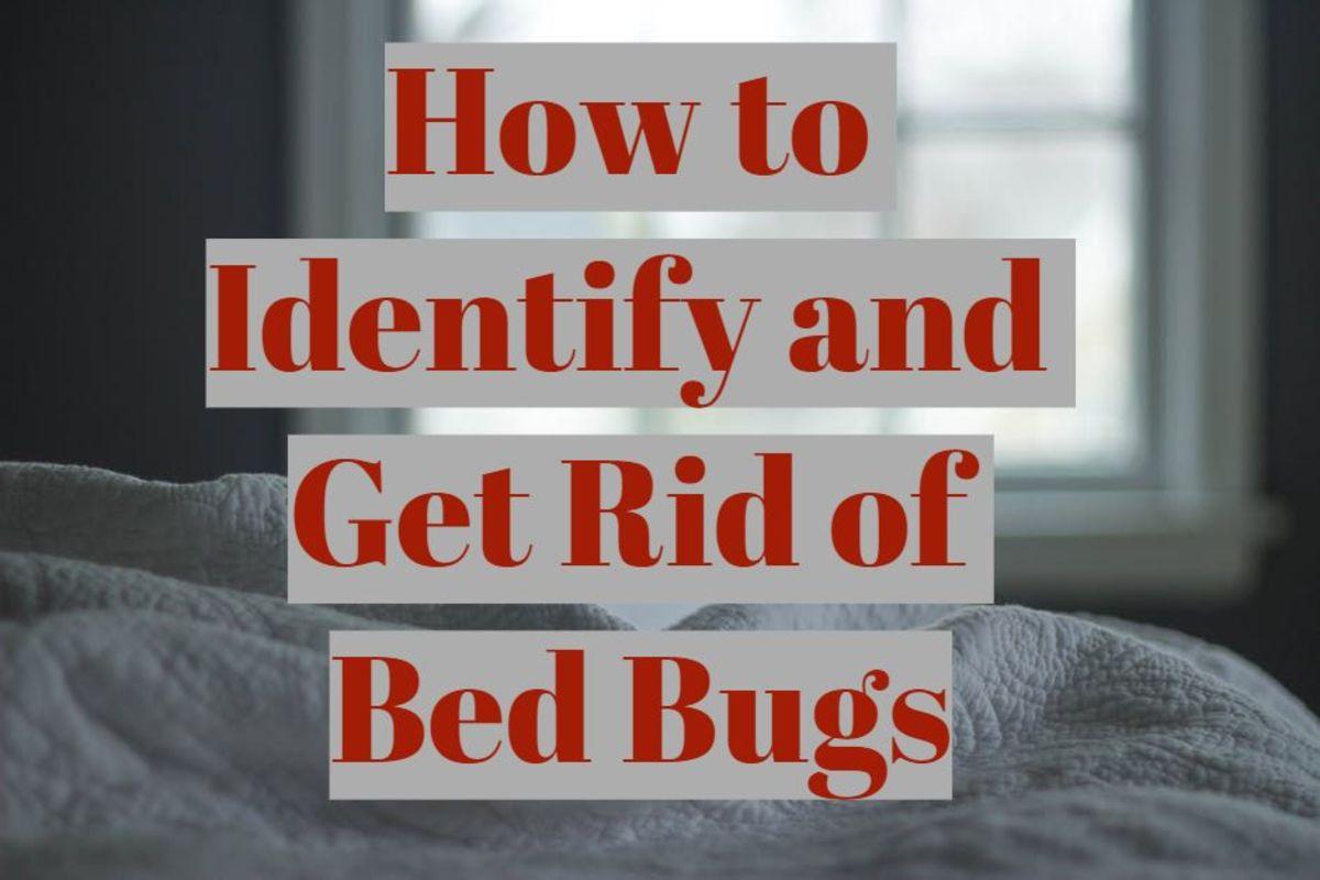 Bed Bugs Little Rock Ar