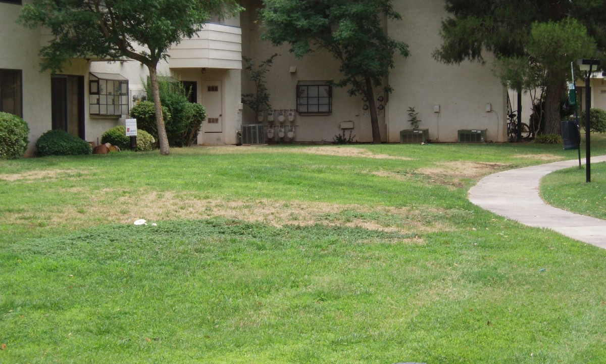 The HOA sprinklers were set on weird schedules that worked for shady, but not sunny areas. Leaks were not fixed. Because sprinklers from different stations watered the same lawn, they could have been set differently for extra sunny spots.