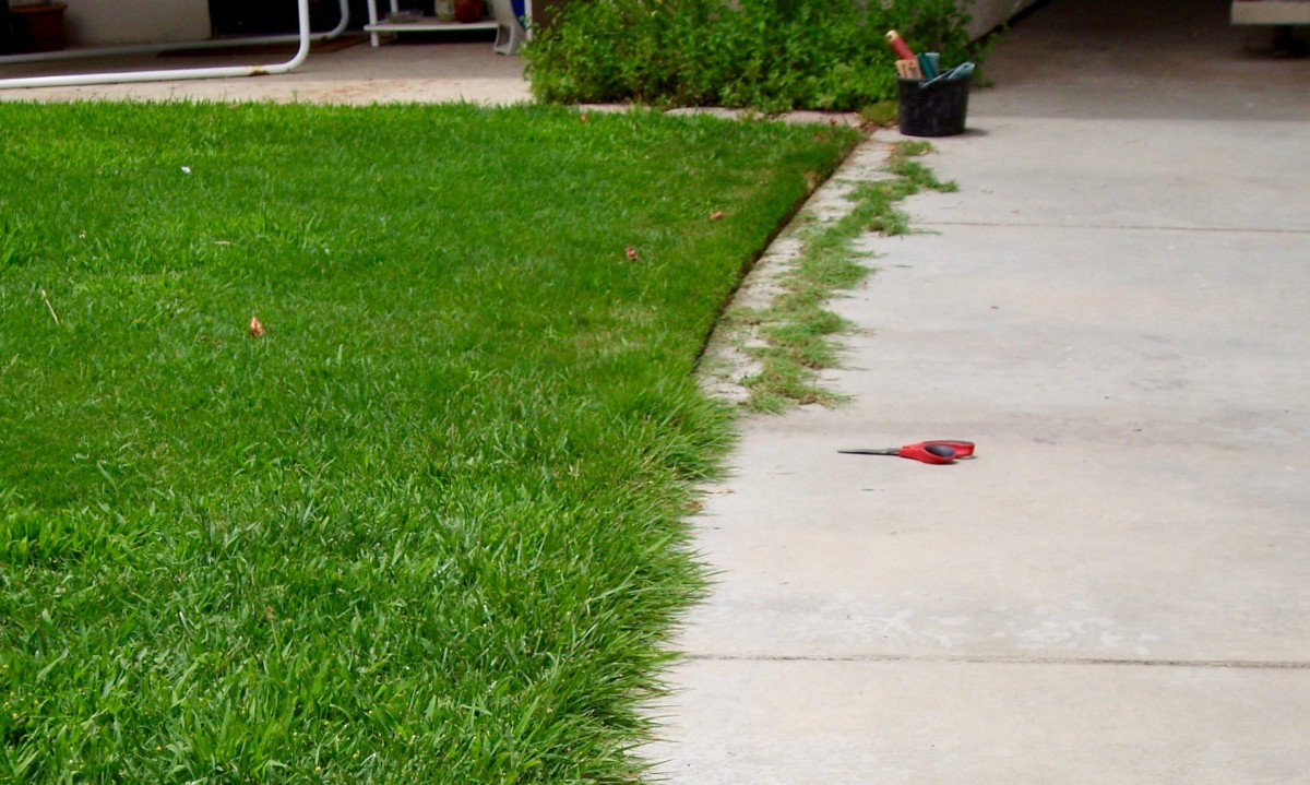 This was the small lawn in front of my HOA condo. The landscaper wasn't doing it, so I edged it myself with a pair of garden scissors. Look how much neater the lawn looks when its sides are trimmed.