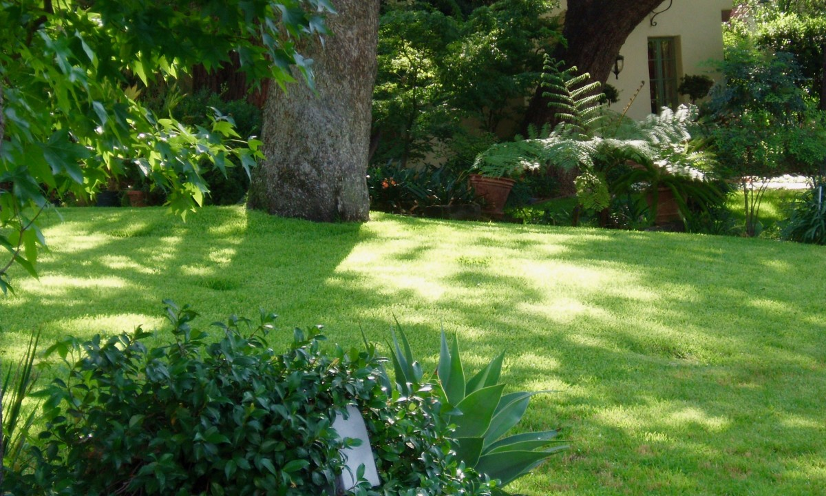 A rich green, healthy lawn is what most homeowners dream of.