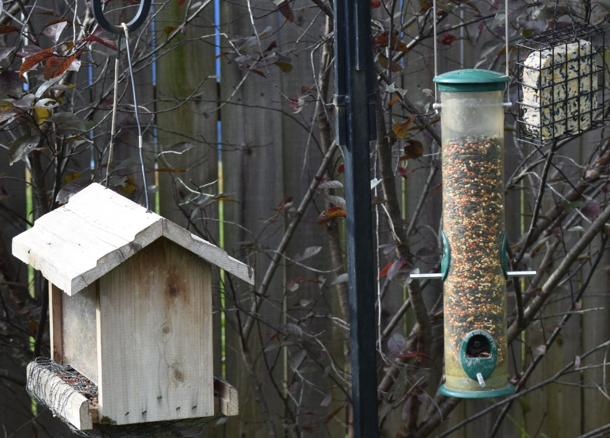 Three feeders (left to right): hopper, tube and suet holder.