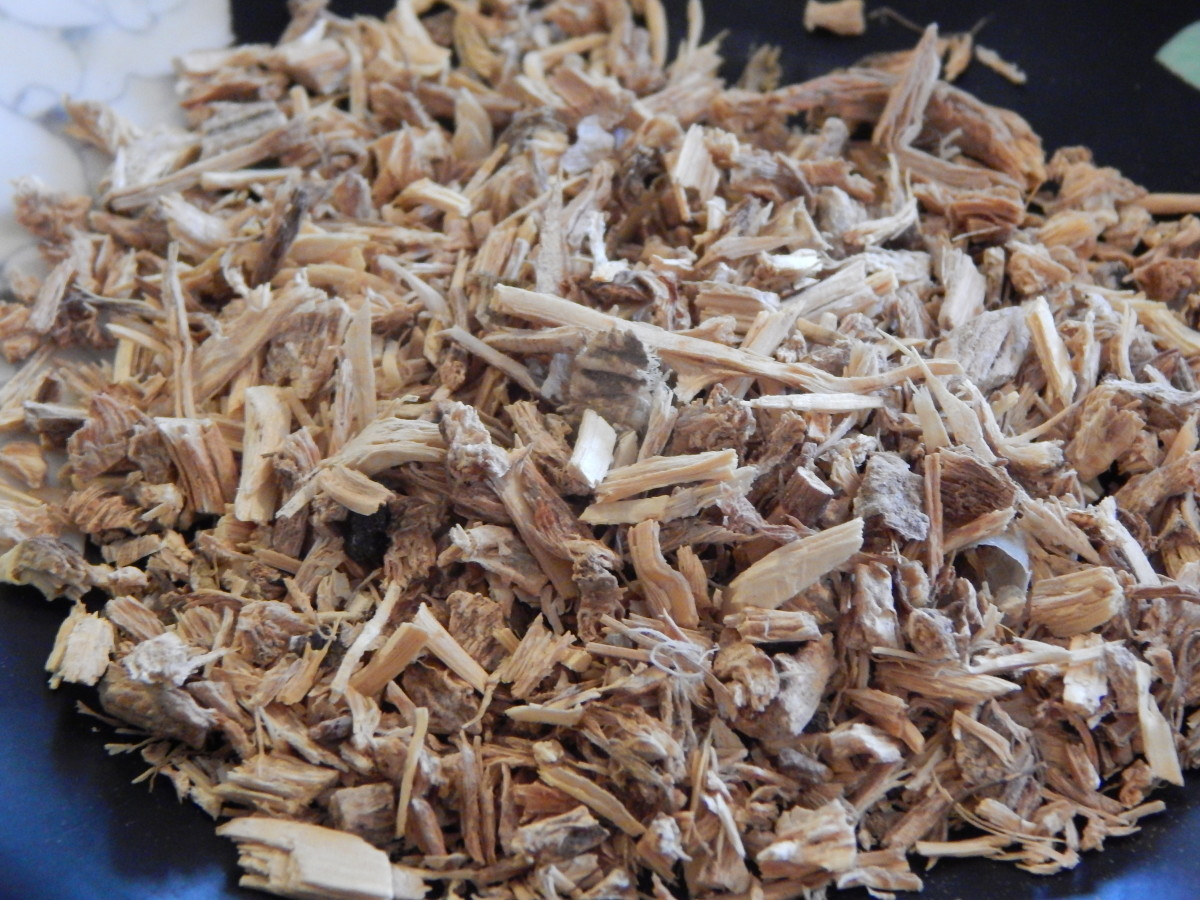 Dried Angelica Roots