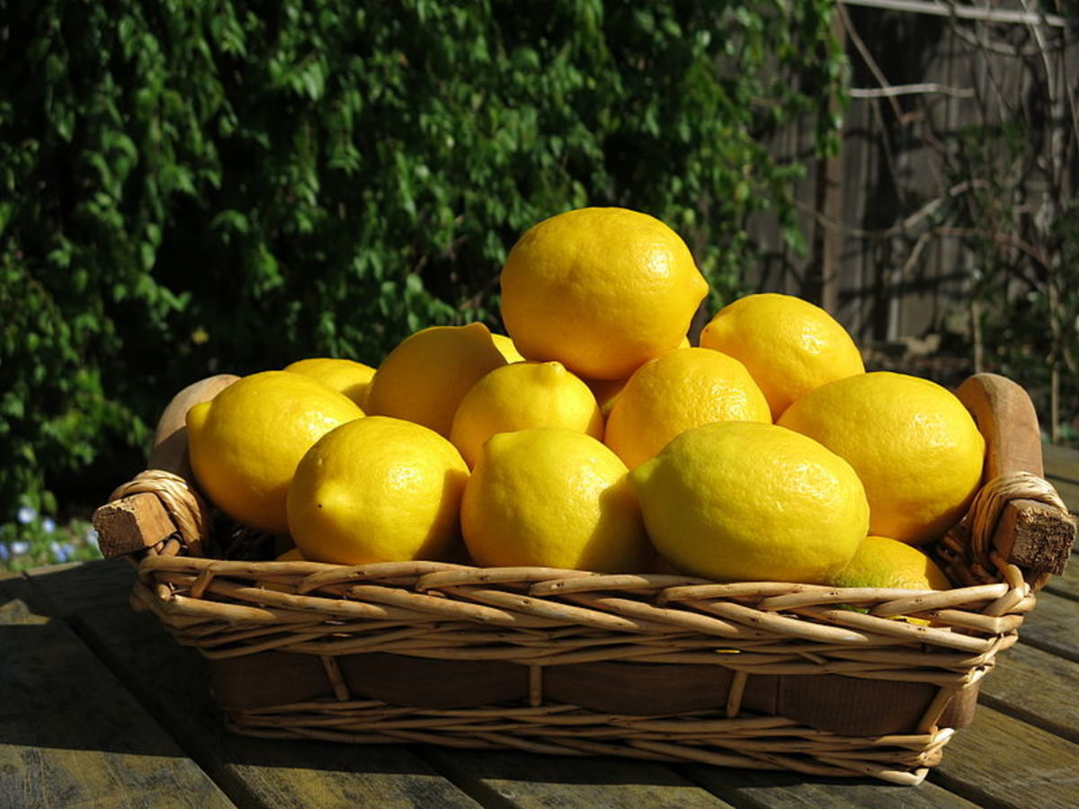 How to Grow a Meyer Lemon Tree