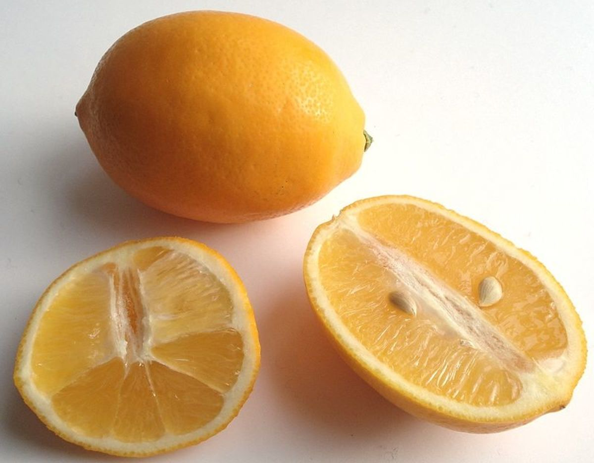 Meyer Lemon fruits have a thin rind and up to 10 seeds per fruit