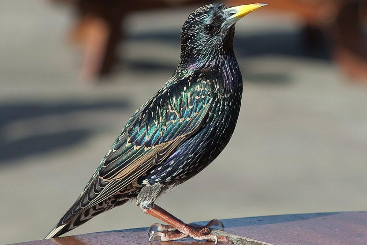 How to Keep Birds off of Patio Furniture