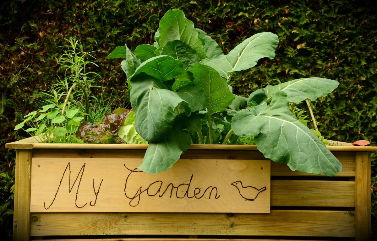 The Best and Worst Materials for Building Your Raised-Up Garden Beds