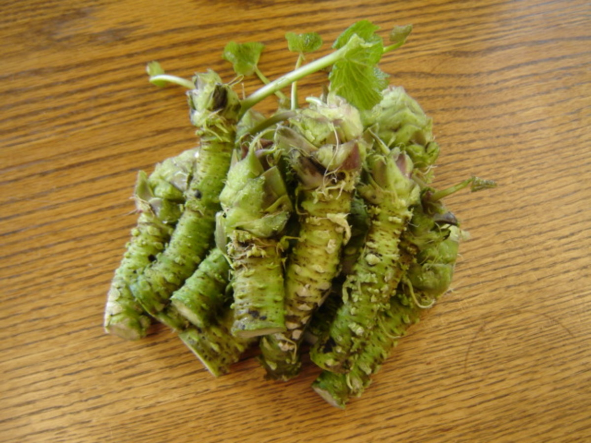 Wasabi stems cleaned and ready for sale