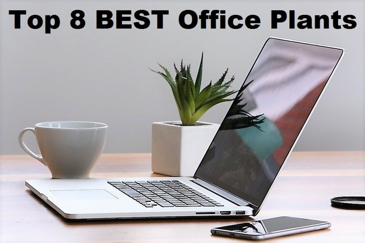 Top 8 Best Office Plants - Low Light and Low Maintenance