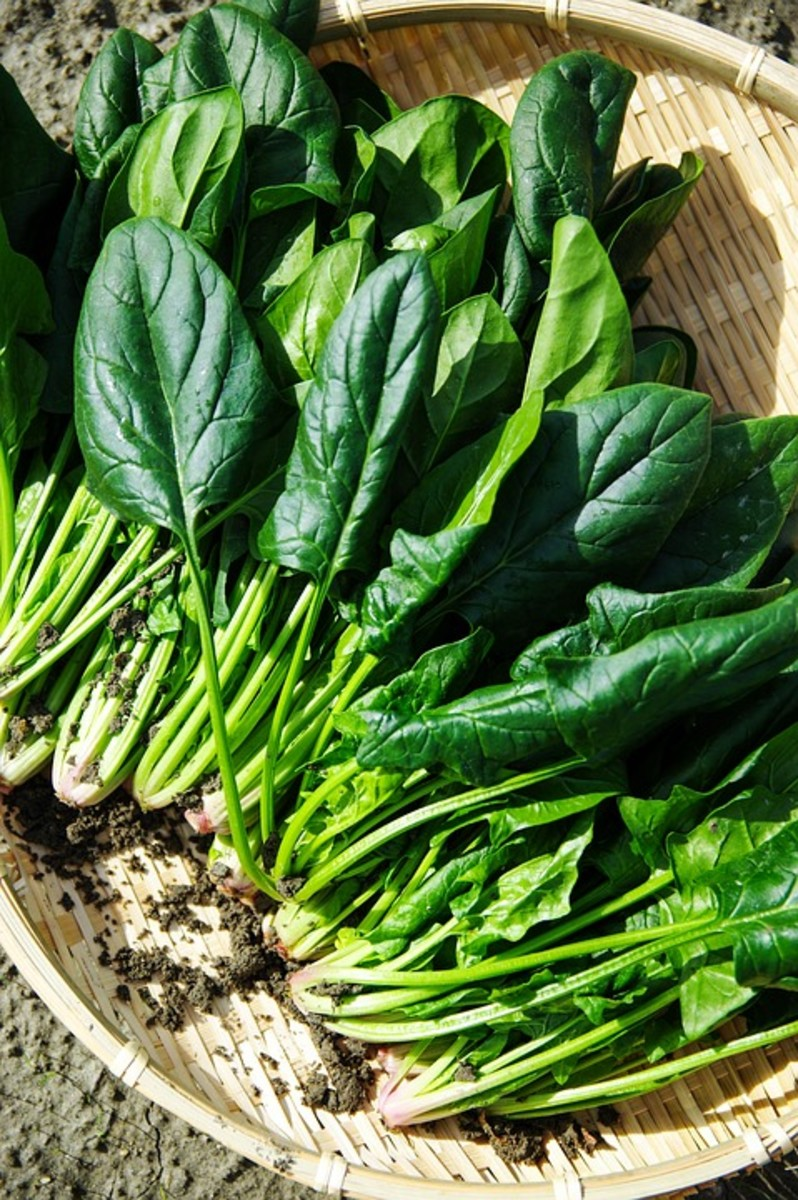 a-guide-to-growing-spinach