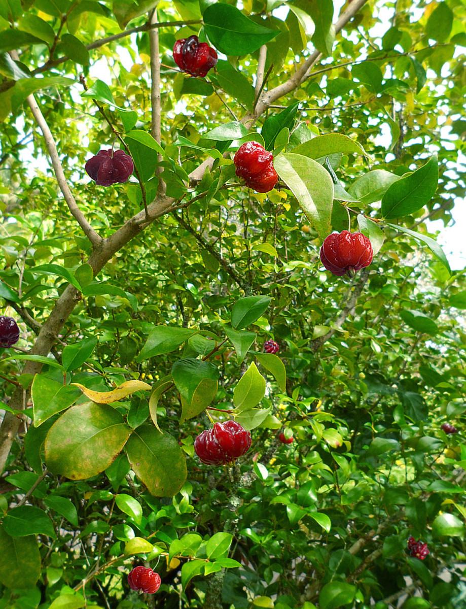 Fruiting season.