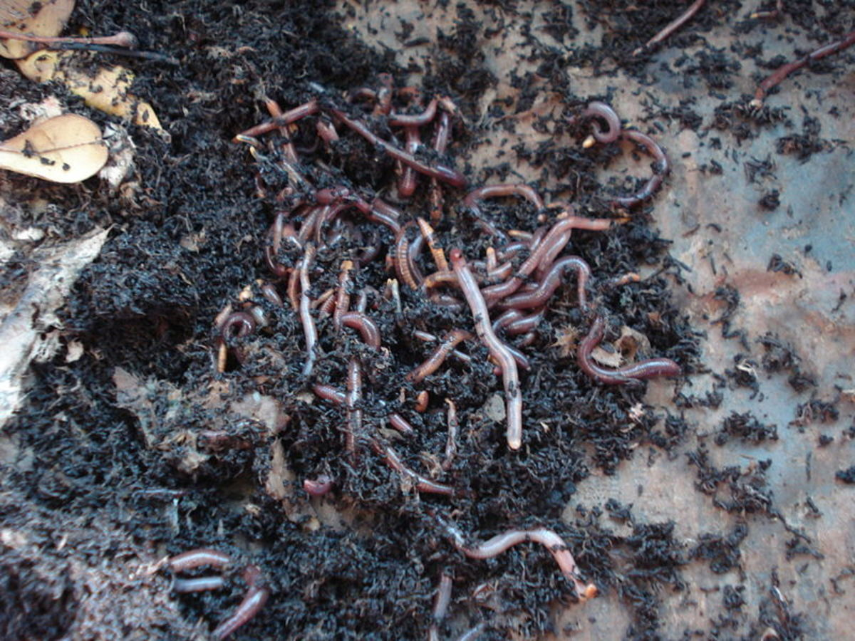 What Is Vermicomposting?
