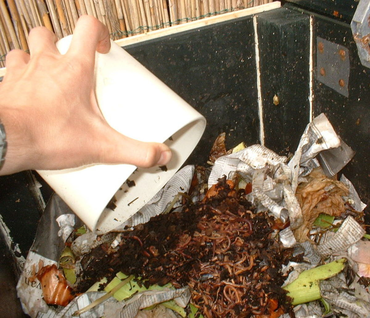 Adding food waste to a vermicomposter