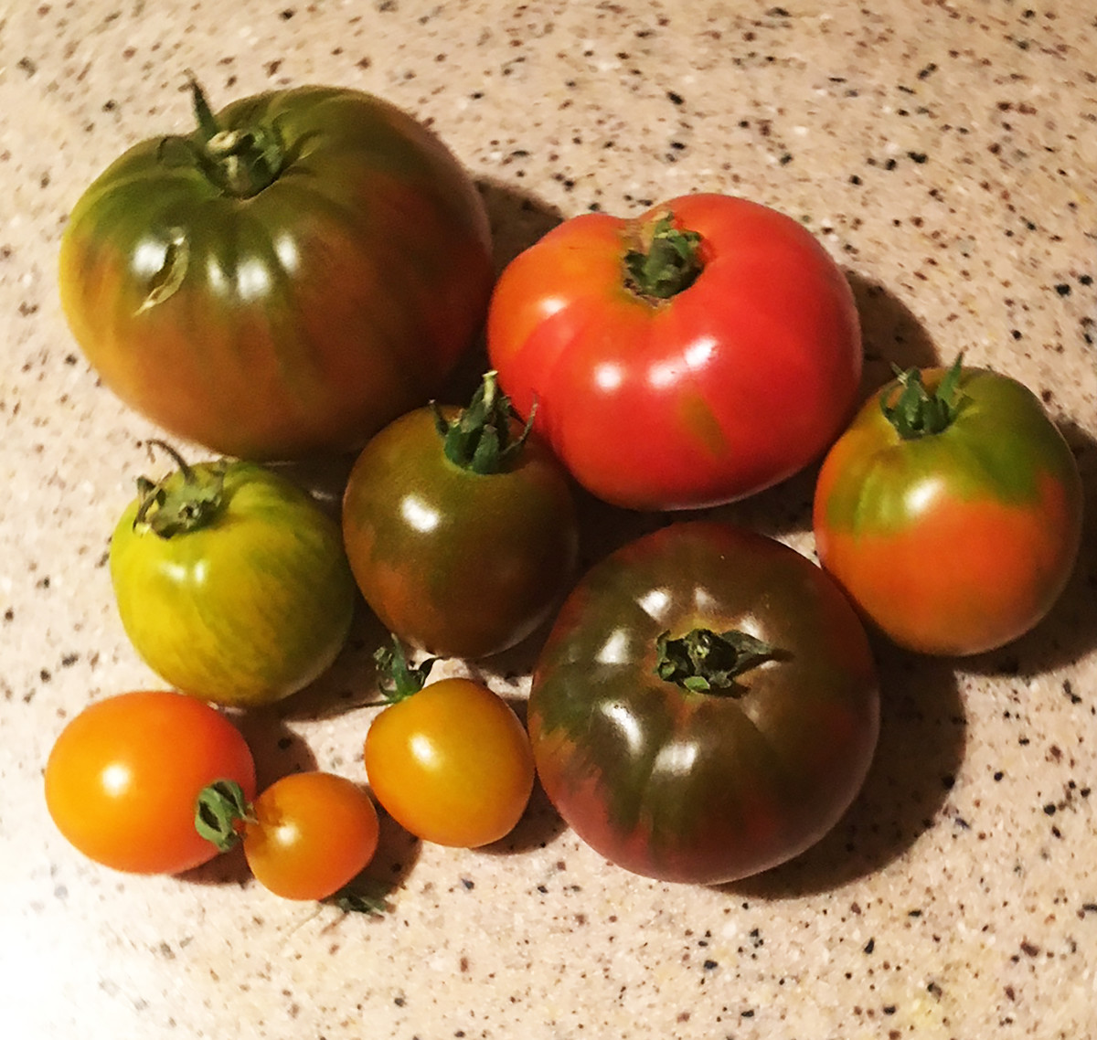 A Selection of Homegrown Heirloom Tomato varieties