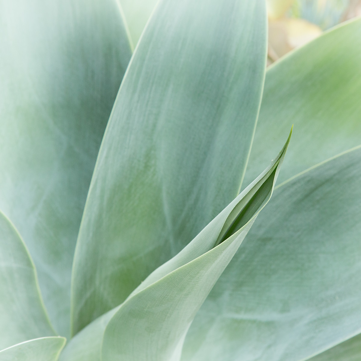 caring-for-indoor-plants-when-warmer-weather-on-the-way