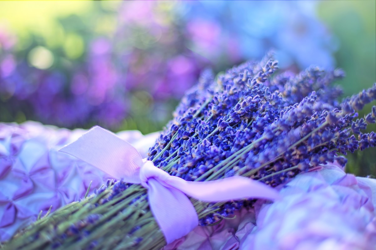 Dried lavender is a nice addition to a kitchen and can be used in potpourris.