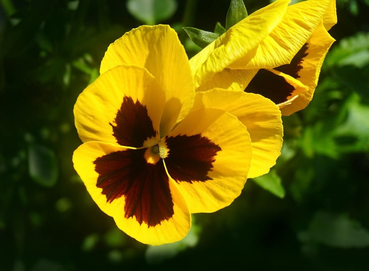 Yellow flowers can brighten up a shady corner of your yard.