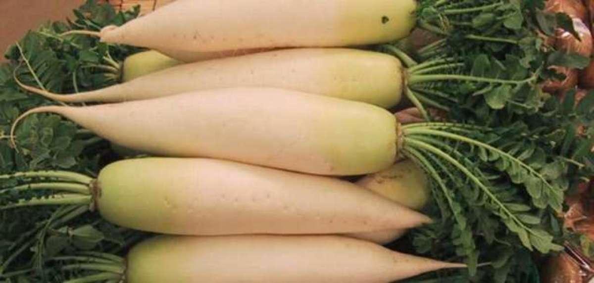 How to Grow Daikon Radishes