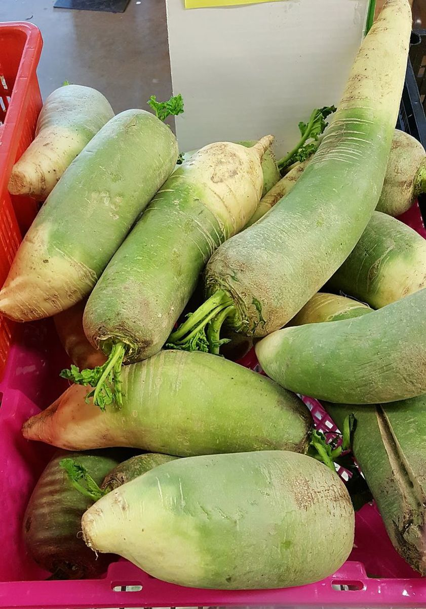 Green Korean Daikon Radishes
