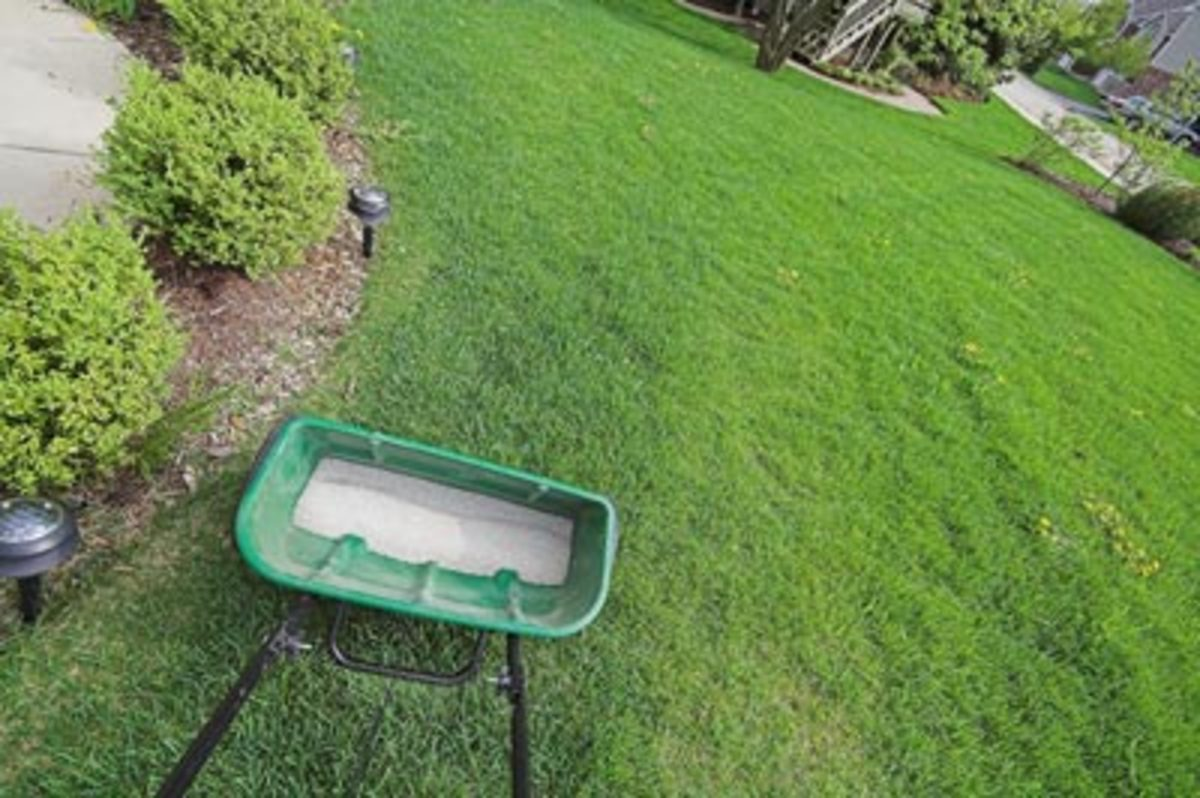 Choose the right kind of fertilizer and dosage for your soil's grass.