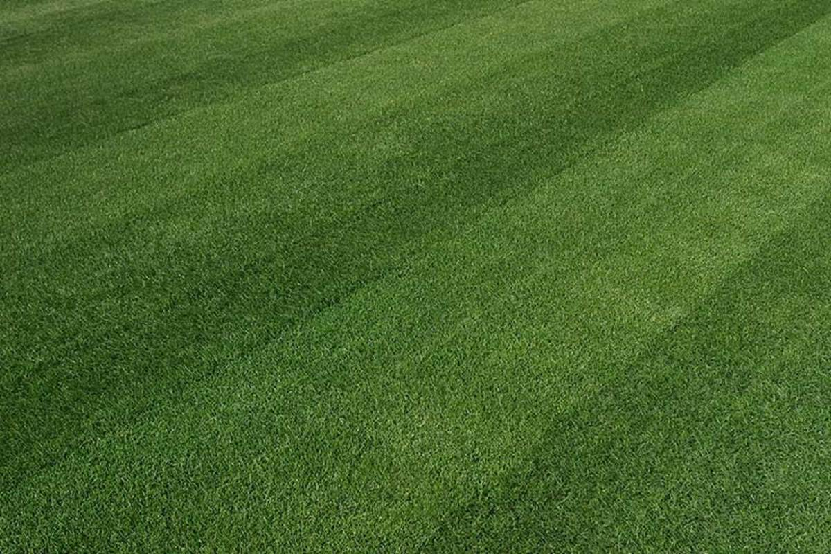 Caring for Ohio Lawn Grass