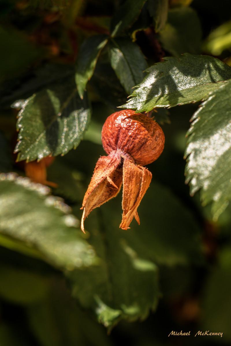 A seed pod.