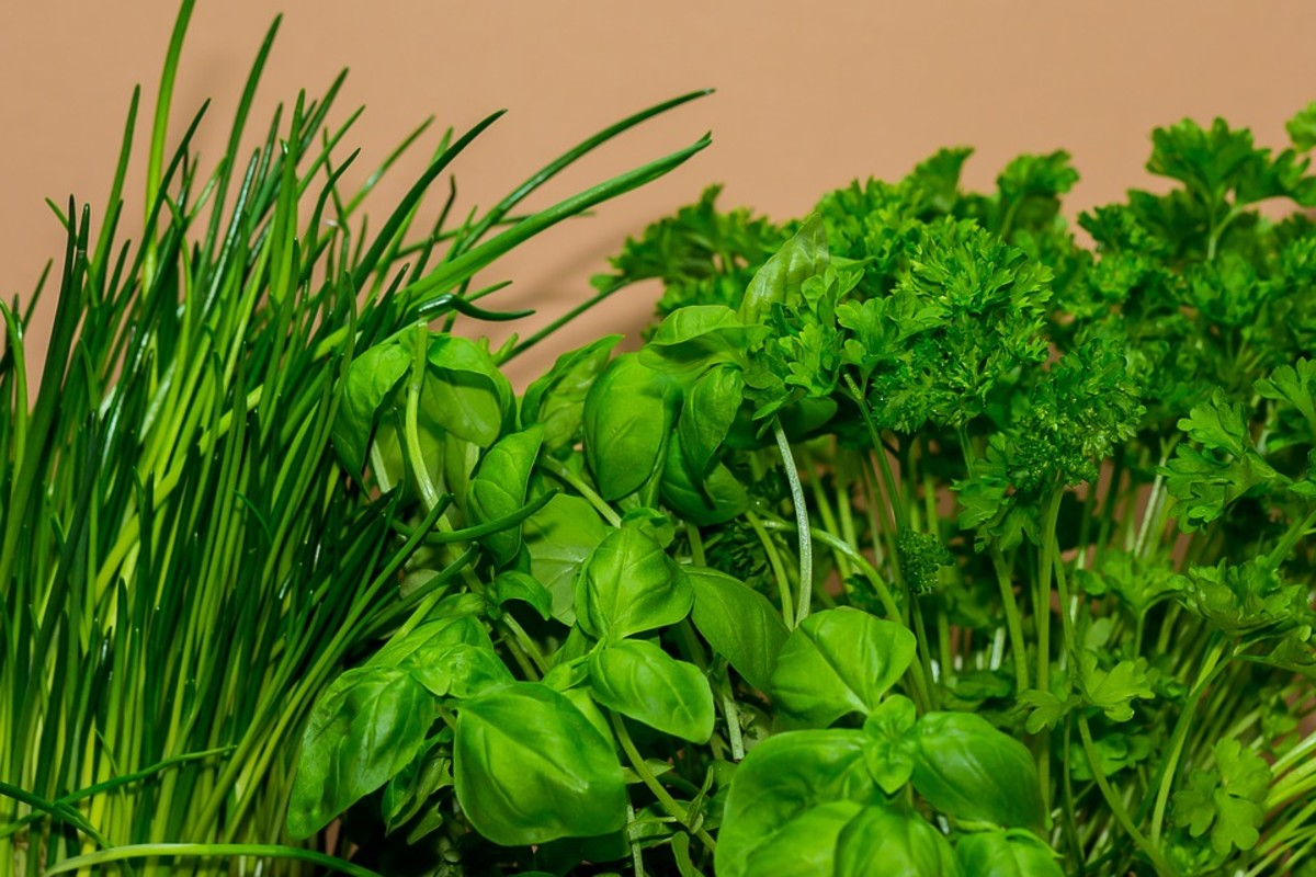 A herb salad made from fresh herbs is not only nutritional, but it's also delicious!