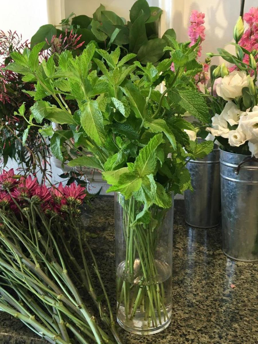 Easy Herbs to Grow in the Garden