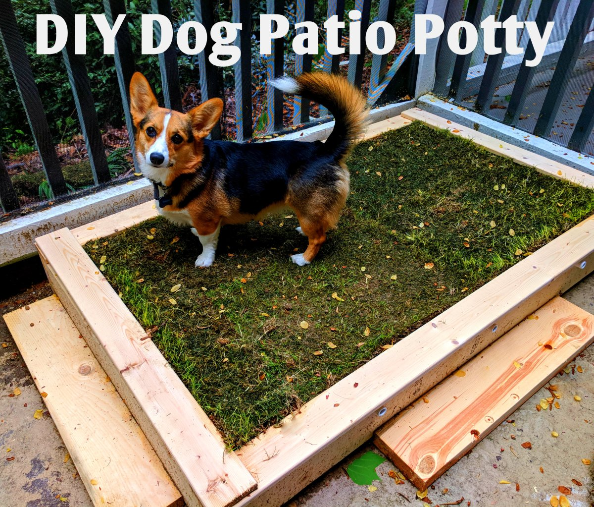 How To Build A Diy Patio Potty For Your Dog Dengarden