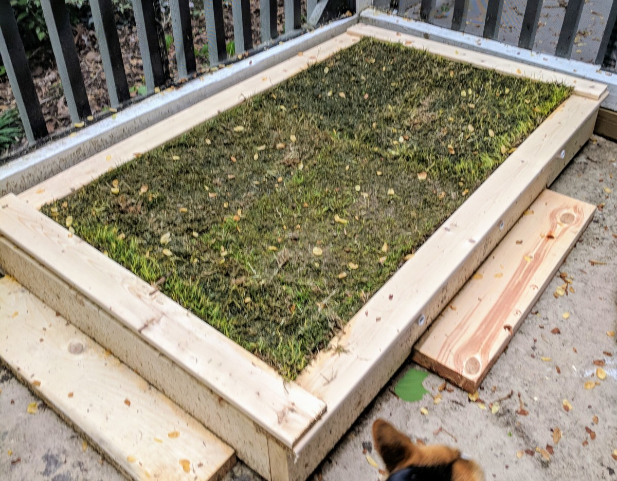 the sod has been placed on top of the screen. Mine is a little muddy from a day of rain while completing this project but it will look great after the sun comes out! You can also use any spare wood to add steps to your porch potty like I did!