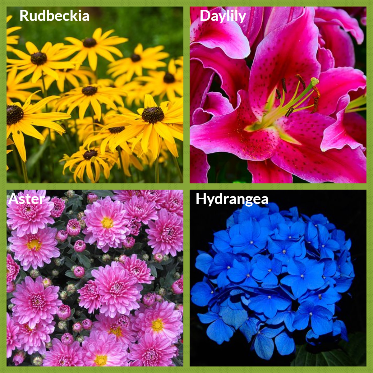 A selection of perennial plants and flowers