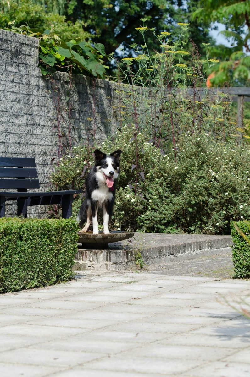 Dog in the garden