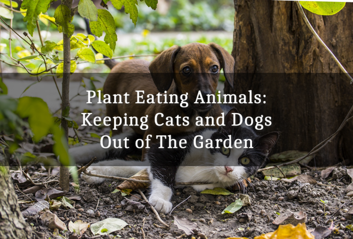 Plant-Eating Animals: Keeping Cats and Dogs Out of the Garden