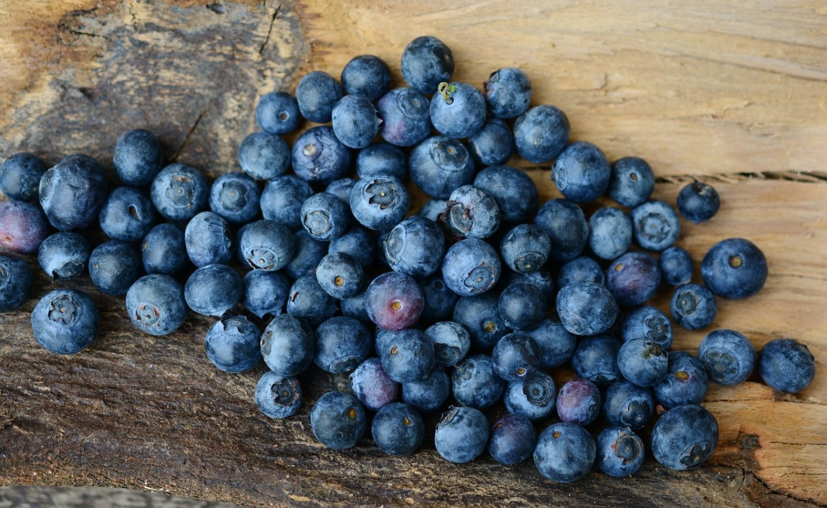 How to Care for Blueberry Bushes