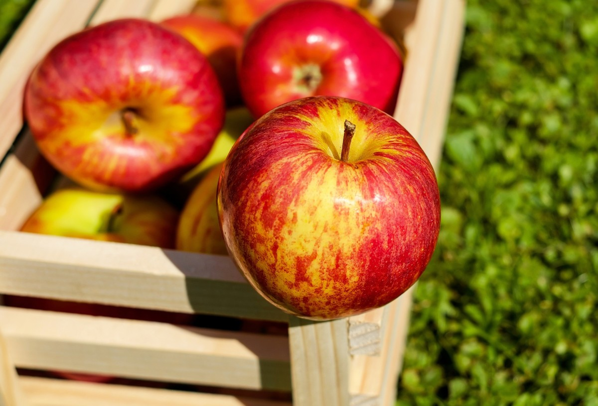 Enjoy fresh apples at home by planting a small tree in your yard.