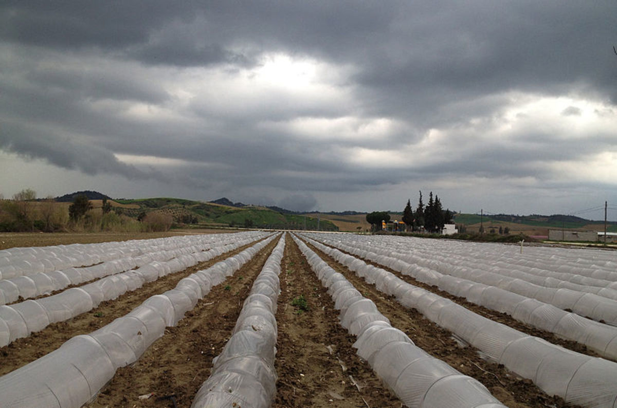 Floating Row Covers.  The sides are anchored in the soil to prevent any pests from getting into the tunnels to destroy the crops.