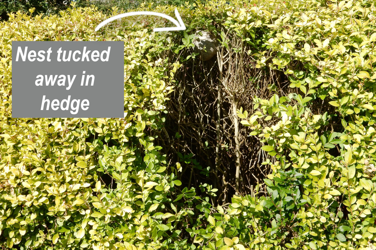 You have to first create easy access to the hedge before attempting to destroy it.