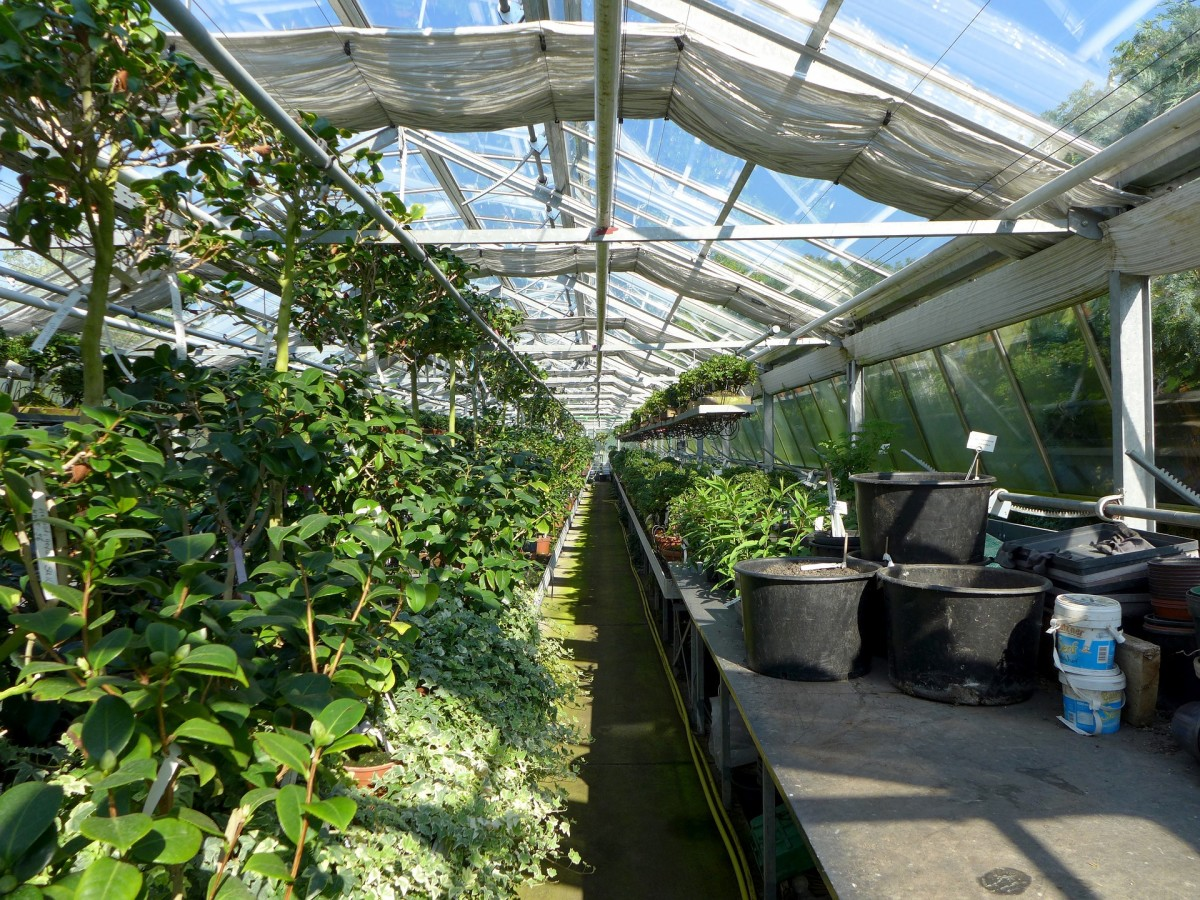 Most nurseries have money-back guarantees on plant purchases.