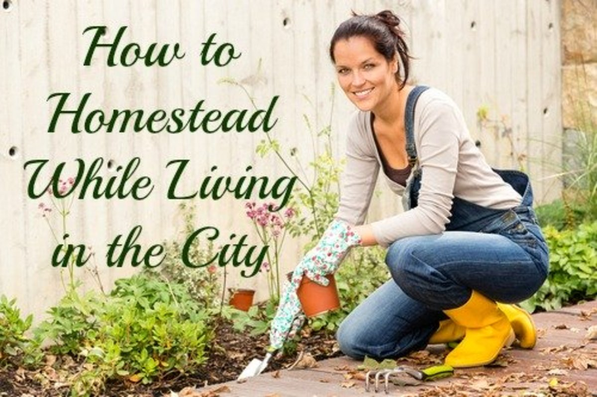 You can achieve your homesteading dreams while living in the city!