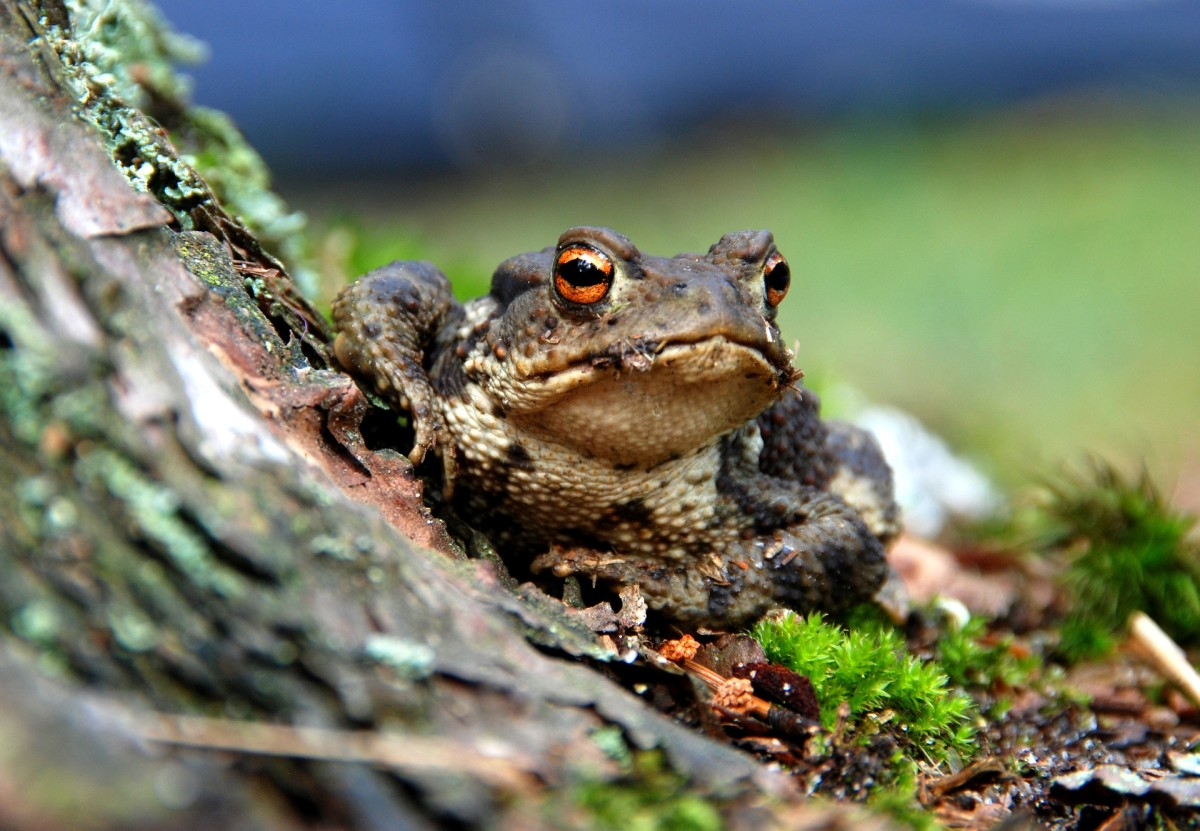 Amphibians love eating insects!