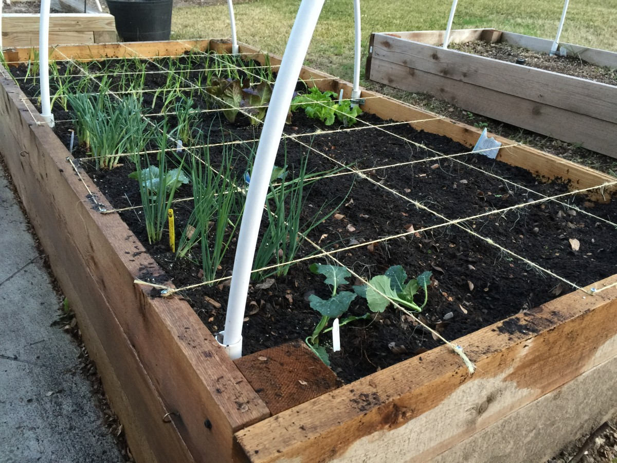 Raised garden beds grant you the opportunity to create ideal soil conditions.