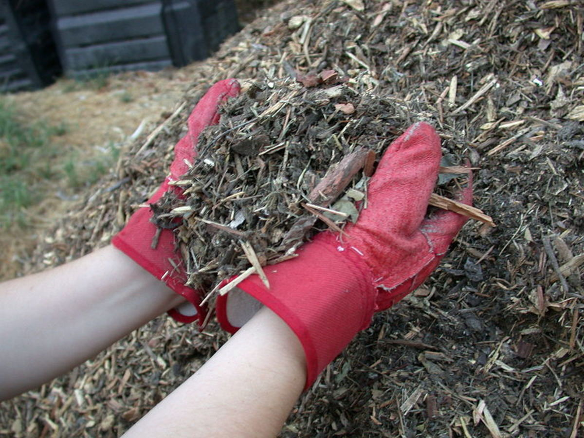 A thick layer of mulch will keep your soil evenly moist and prevent weed seeds from sprouting