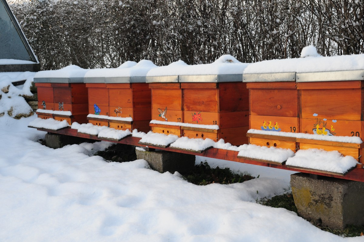 What Do Beekeepers Do in Winter?